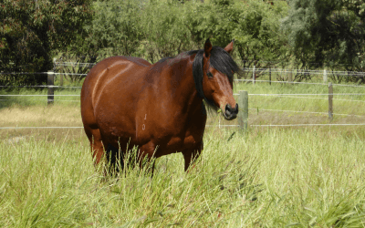 Bumpy, the Horse that Inspired Full Circle Equestrian